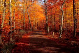 maryland fall foliage
